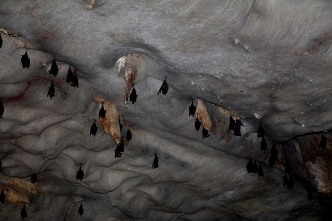Luolan asukkaat. Bats in the cave.