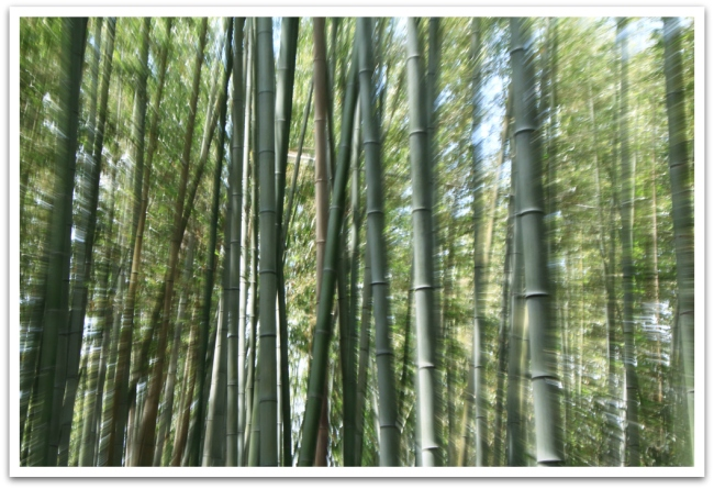 Poljimme Arashiyaman katsomaan kuuluisaa bambumetsää.