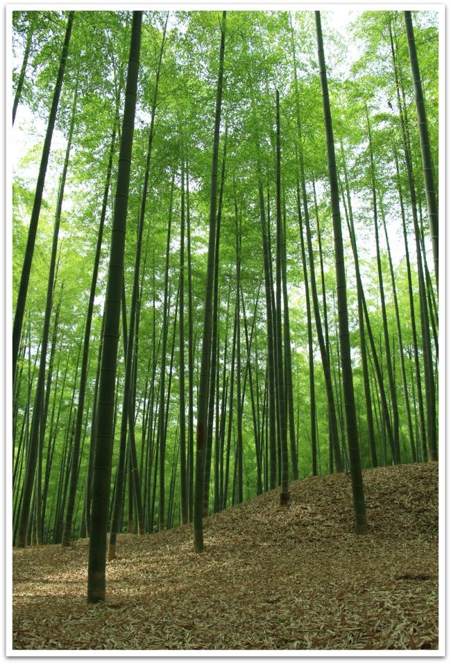 Löysimme Arashiyaman bambumetsää kauniimman ja hiljaisemman Fushimi-Inari Taishan takaa.