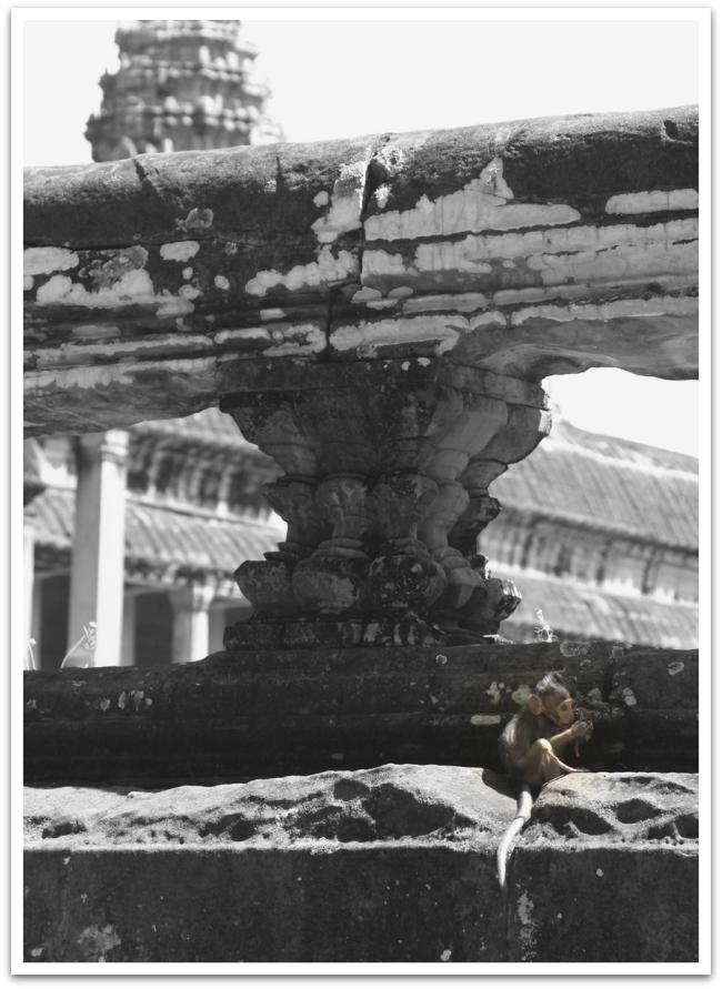 Temppelin takana asusti myös kokonainen apinaperhe, jonka pienin jäsen oli aika suloinen.