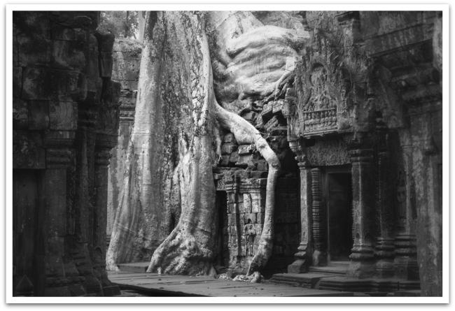Kun päivä oli valjennut, suuntasimme tutustumaan Ta Prohmin temppelille, joka on jäänyt viidakon saarroksiin. Puut olivat työntäneet juurensa syvälle raunioihin ja siirrelleet suuria kivilohkareita tieltään. Aikaisin aamulla temppelissä sai seikkaila aivan omassa rauhassa, päivällä tämä temppeli, joka on toiminut Tomb Rider-leffan lavasteina, on aivan pullollaan vierailijoista.