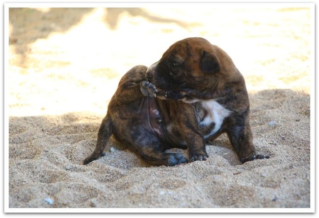 Näin suloinen tiikerinkirjava pikkukoira löytyi Grupukin rannalta.