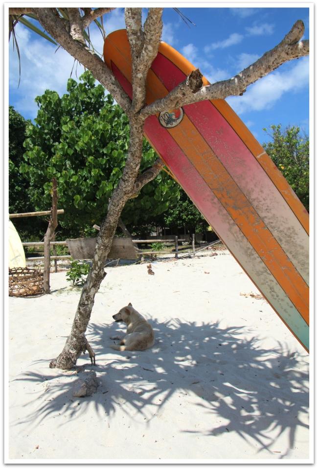 Tämä surffikoira otti lungisti Lombokin saarella Selong Belanok -rannalla.