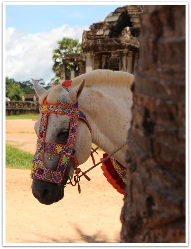 Angkorin temppeleillä Kambodzassa pari ponia seisoi päivät pääskytysten kuvausrekvisiittana turistien alla. Tämä poni oli ansaitulla tauolla.
