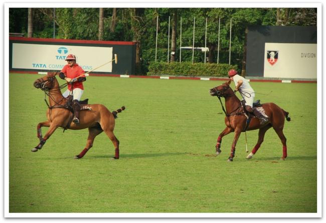 Singaporessa hevoset juoksivat pallon perässä hevospooloharjoituksissa.