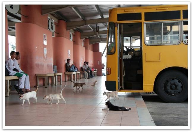 Malesiassa Mersingin bussiaseman olivat vallanneet kymmenet kissat.