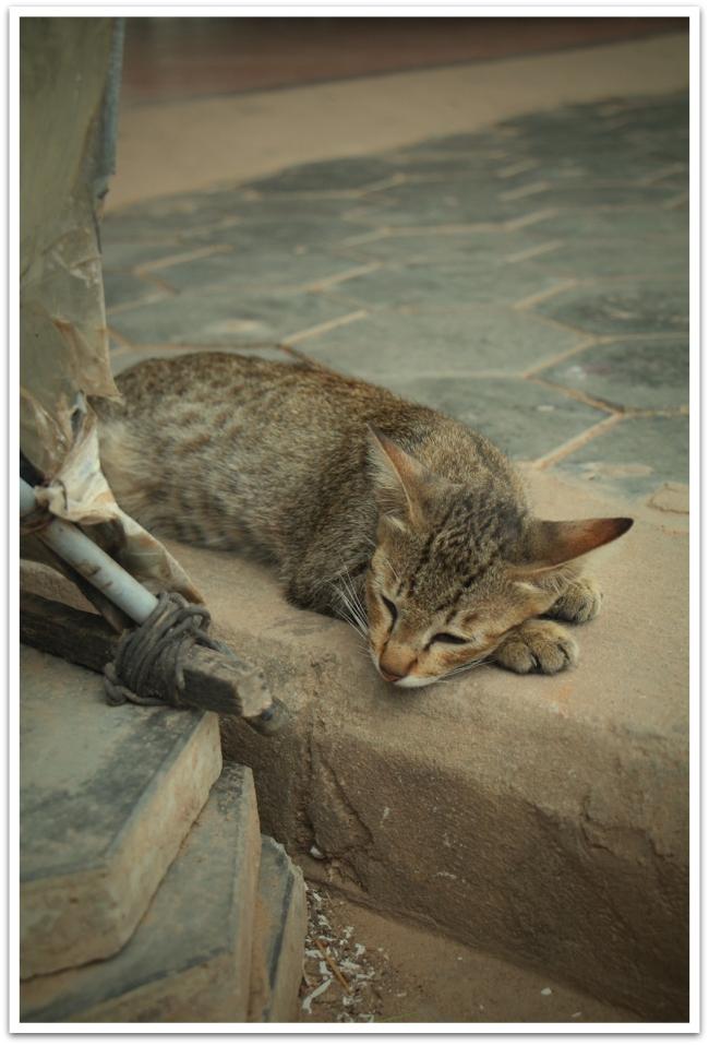 Tämä kissa otti päivätorkut Siem Reapissa.