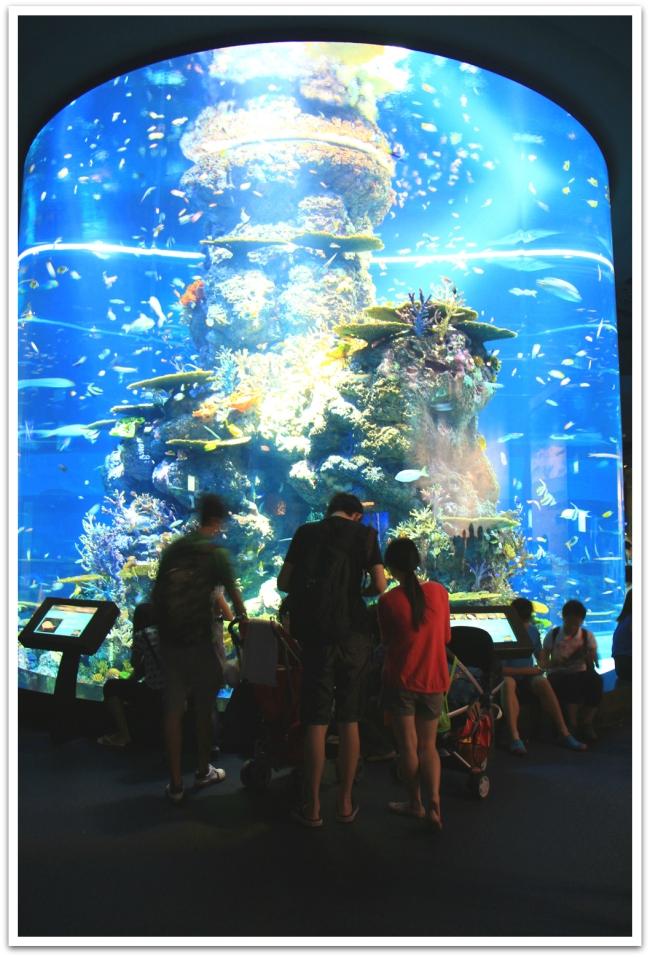 Singaporen akvaario on maailman suurin.