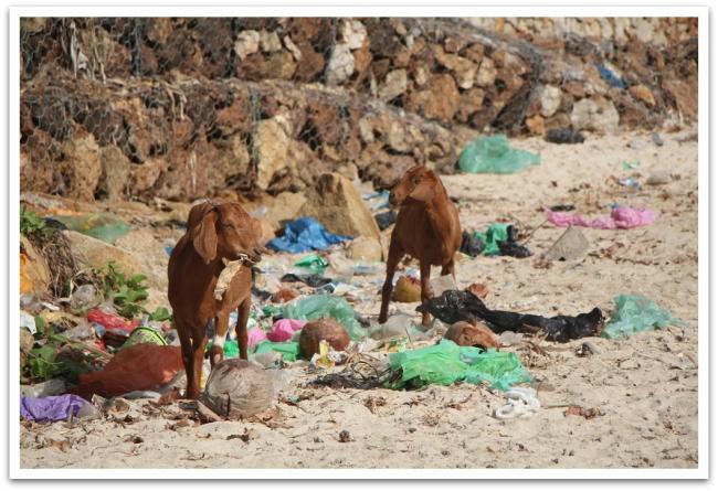 Kileillä on suuri vastuu saaren jätehuollosta.
