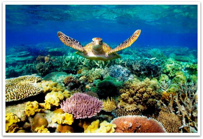 Pääsimme kokeilemaan laitesukellusta Isolla valliriutalla. Vedenalainen elämä oli ihmeellistä, upeita koralleja ja merikilpikonnia! Koska meillä ei ollut vedenaista kameraa, on kuva täältä!
