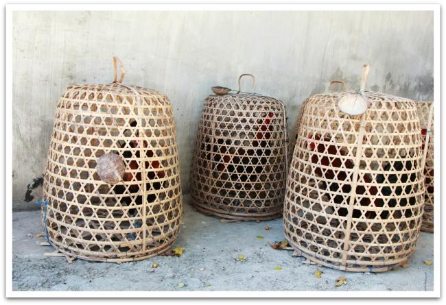 Täälläkin aamut alkoivat kukon kieunnalla. Kukkotappelut ovat suosittuja Indonesiassa, vaikka kaikki uhkapeli onkin kiellettyä. Tappelukukkoja näkyi lähes jokaisen talon pihassa kupujensa alla.