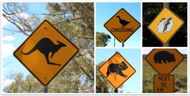 Autolla Australiassa: Sydney-Melbourne-Phillip Island