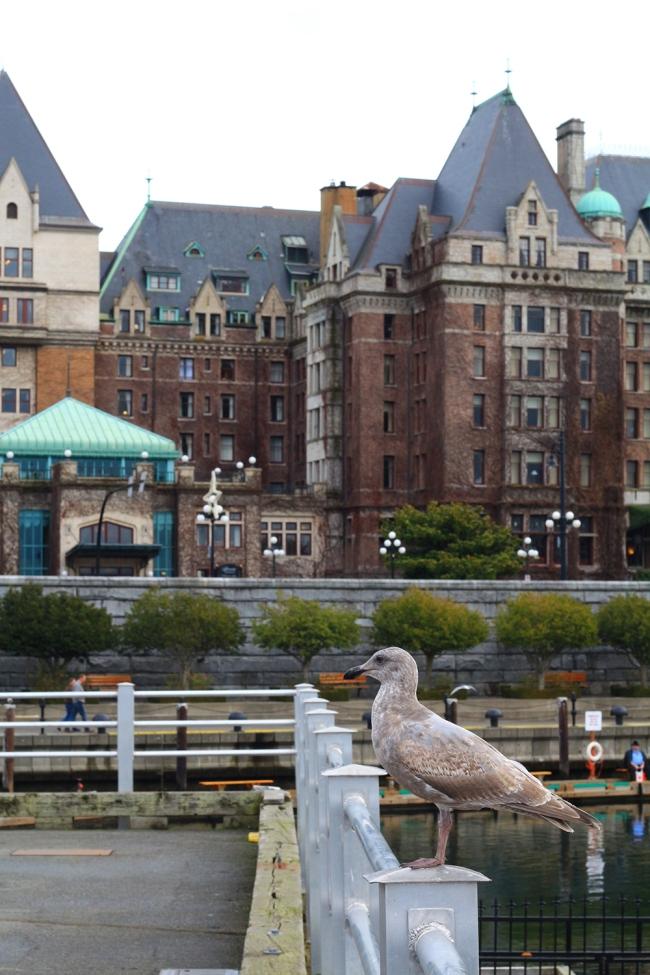 Sataman lokki ja taustalla yksi kuuluisimmista rakennuksista, Empress Hotel